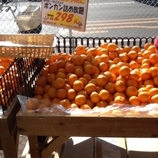 ポンカン詰め放題 298円(税抜)
