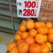 伊予柑 280円(税抜)