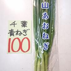 青ねぎ 100円