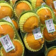デコポン 398円(税抜)