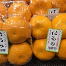 はるみ 498円(税抜)