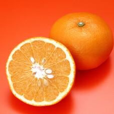 手で皮がむけるオレンジ 429円