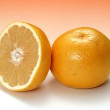 グレープフルーツ〈ホワイト〉 99円(税抜)