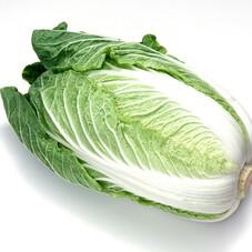三ツ星野菜の白菜 170円