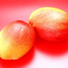 アップルマンゴー 5ポイントプレゼント