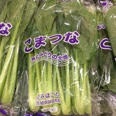 小松菜 158円(税抜)