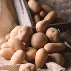 野菜畑のドーナツ(じゃがいも) 10ポイントプレゼント