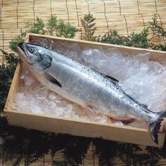 甘塩銀鮭 333円(税抜)