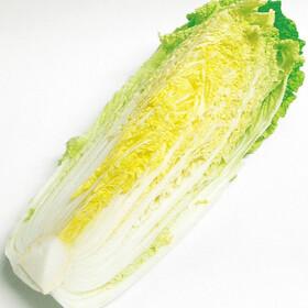 白菜 99円(税抜)