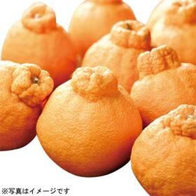 スイーツキング デコポン 498円(税抜)