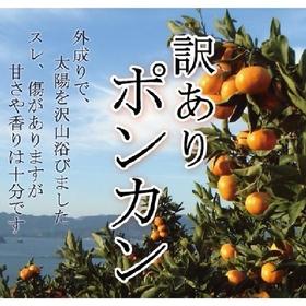 訳有りポンカン 350円(税抜)