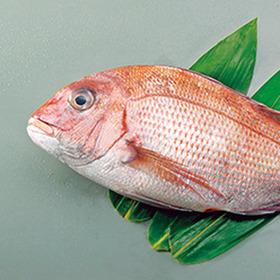 真鯛(養殖・刺身用) 980円(税抜)