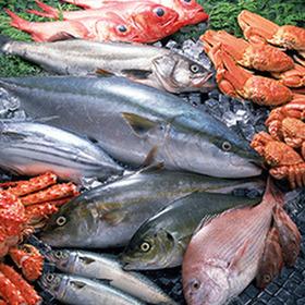 【鮮魚】吉川水産 価格なし