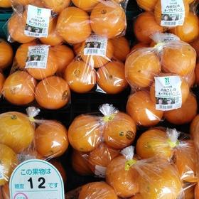 ネーブルオレンジ 袋入り 538円(税込)
