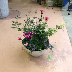 綿半オリジナル 季節の寄せ植え 24cm鉢 1,628円(税込)