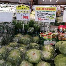 レタス 214円(税込)
