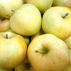シナノゴールドりんご 193円(税込)