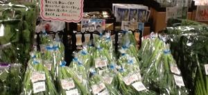 スチィックセニュール 98円(税抜)