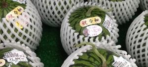 小玉すいか 1,200円(税抜)