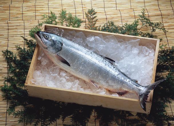 刺身用生銀鮭(養殖・解凍) 238円(税抜)