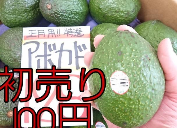 アボカド(大玉) 100円