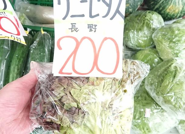 サニーレタス 200円(税込)