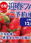 迎春フルーツ ご予約承り中!