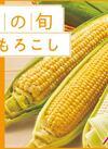 【とうもろこしギフト】早得8月11日(木)