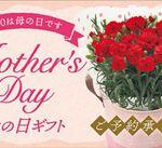 【母の日ギフトご予約承り中!】(*˘︶˘*).。.:*♡