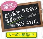 新発売!ダヴボタニカルシャンプー