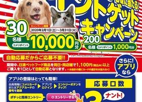 日清ペットフード ポイントゲットキャンペーン