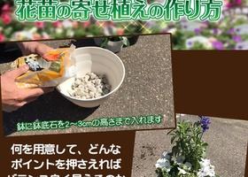 花苗の寄せ植えの作り方