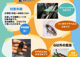 <浦添本店>自由研究イベント「世界のG観察」